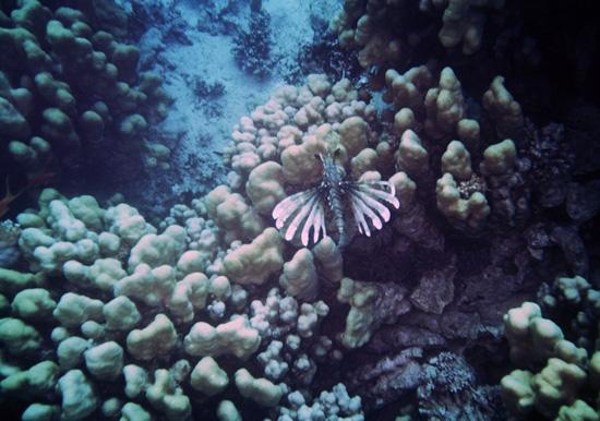 butterfly_em