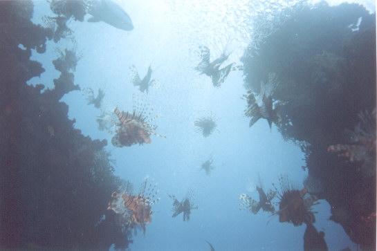 fish1a